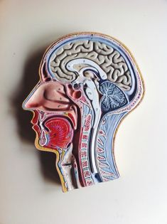 """daydreamingphotoboy: """" 28.4.2014 Learning about the brain. Svicar """""""