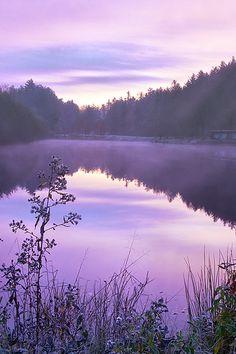 Portrait of a Pond