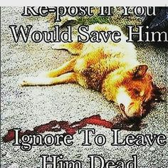How sad I would stop everything to help this dog