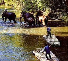 Ban Sobe Win, Thailand - Chiang Mai Provence - Asian White Elephants and Bamboo Rafting! Elephant Trekking, Elephant Ride, Places Around The World, Travel Around The World, Chang Mai Thailand, Great Places, Places To See, Chiang Mai Elephant, Thailand Elephants