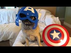 Earth's Mightiest Heroes Are...  Avenger Pugs!
