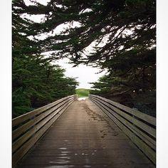 Half Moon Bay, CA #holidayrecovery #halfmoonbay #norcal #freenotecloth