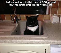 I'm not sure what I would do if I found a cat in my house hahaha
