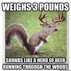 hahahahahaha....SO TRUE!! And annoying so I was out deer hunting a while back and im sitting there its real quiet then....BAM a stupid squirrel fell out of a tree like five feet from me