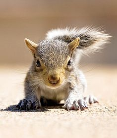 Baby squirrels start arriving in March,