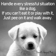 Handle every stressful situation like a dog. . .