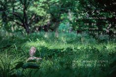 https://flic.kr/p/umbkz6 | 写真展「ふくろう」のお知らせ