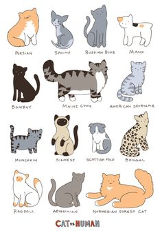 Types of Cats - Different type of cats Catsincare.com