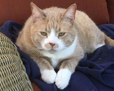 LOST CAT: 03/10/2018 - Rohnert Park, California, CA, United States. Ref#: L42433 - #CritterAlert #LostPet #LostCat #MissingCat