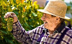 Does #Papa enjoy discovering new wines? Sign him up for a #wine club membership and the best wines from #California and around the world will be brought to his doorstep. Salud! https://www.cawineclub.com/about-our-club