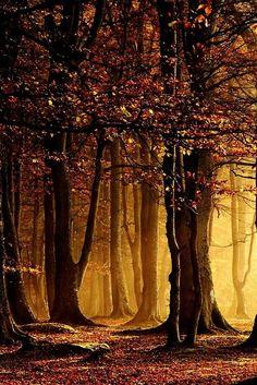 Golden forest hues