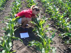Corn yield modeling towards sustainable agriculture - Scienmag