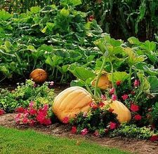 How to rotate vegetables in the garden.