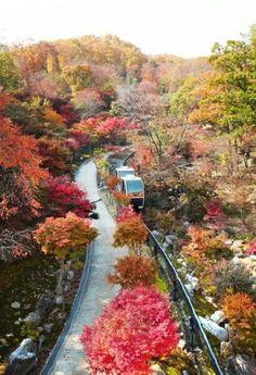 Korea 곤지암 화담숲
