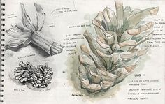 A Level Art sketchbook page exploring natural forms