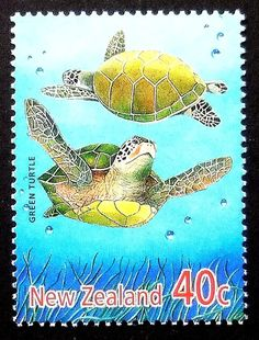 Green Turtle New Zealand 16452 Framed by PassionGiftStampArt