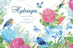 hydrangea watercolor clipart by MitrushovaArt on @creativemarket