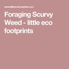 Foraging Scurvy Weed - little eco footprints