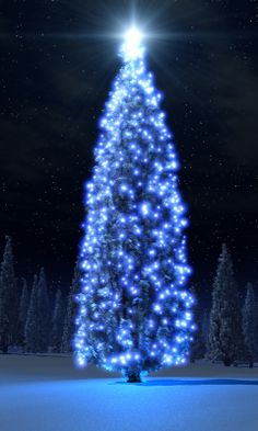 Hd Blue Christmas tree pocket pc wallpapers