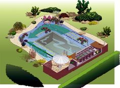 A natural swimming pool, also known as the pond, is a body of water that does not use chemicals or electrical equipment to disinfect water. Swimming Pool Plan, Swiming Pool, Swimming Pool Designs, Garden Swimming Pool, Natural Swimming Ponds, Natural Pond, Diy Pond, Pond Design, Ponds Backyard