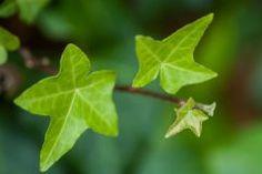 Plant Leaves, Plants, Plant Parts, Seeds, Mulches, Flora, Plant, Planting