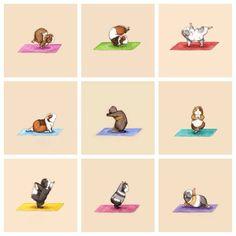 guinea pig yoga
