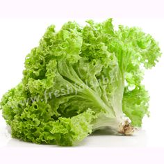 Lettuce Leafy - सलाद पत्ता - Lettuce is a mild-flavored, leaf vegetable commonly utilized in salads and sandwiches.