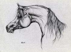 horse drawings | ... Horse Drawing 62 Drawing - Arabian Horse Drawing 62 Fine Art Print