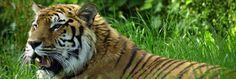 Midlands Mums: Woburn Safari Park