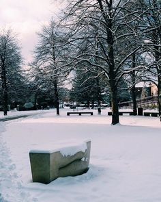"""Spotted: Lawrence Argent's """"Whispers"""" with snow mustaches. The #universityofdenver is looking very beautiful today."""