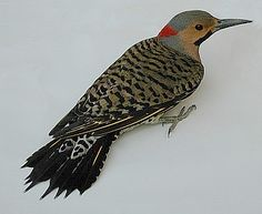 Google Image Result for http://members.mrtc.com/anvk/birds/DSCN3867s2.jpg