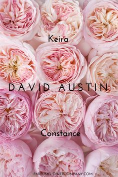David Austin Roses #blushwedding