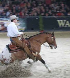 Appy reining horse