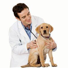 7 surprising ways to save on pet care