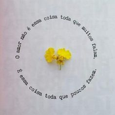 Nasceu uma flor numa página do meu livro de alguém. Foto que tá viajando pela Internet ;) alguém sabe quem tirou? #écadacoisaqueescrevosópradizerqueteamo