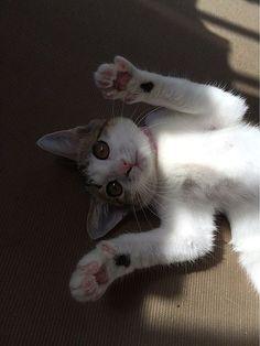 うちの猫の画像 プリ画像