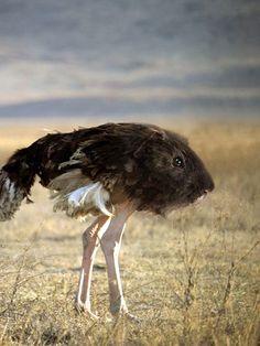 Animals Photoshopped To Create Hilarious New Species - DesignTAXI.com