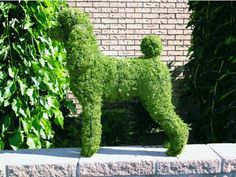 Poodle topiary—for St. Patrick's Day all year long - The Poodle . topiary—for St. Patrick's Day all year long - The Poodle . Poodle Grooming, Dog Grooming, Dog Garden, Garden Art, I Love Dogs, Cute Dogs, French Poodles, Standard Poodles, Poodle Cuts