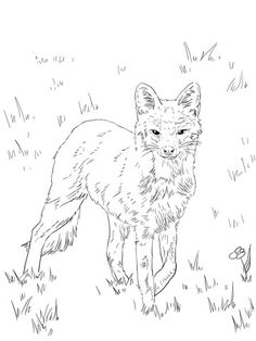 North American Grey Fox Coloring Page From Category Select 30017 Printable Crafts Of Cartoons Nature Animals Bible And Many More