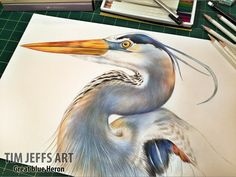 Progress pic #3 of a Great Blue Heron. Drawn with Tombow Irojiten Colored Pencils