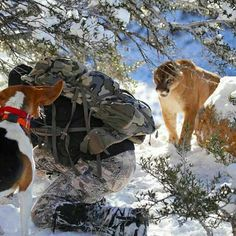 Lion Hound and Hunter get dangerously close to a mountain lion.