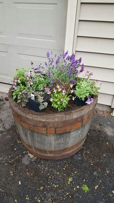Spring Whiskey barrel.  Yellow House Landscape Design.