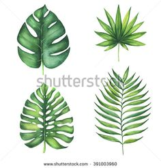 Set of green tropical palm leaves. Watercolor illustration of exotic plant. Isolated on white background. Beautiful set of design elements - stock photo Exotic Plants, Exotic Flowers, Watercolor Leaves, Watercolor Paintings, Plant Painting, Tropical Leaves, Watercolor Illustration, Design Elements, Floral
