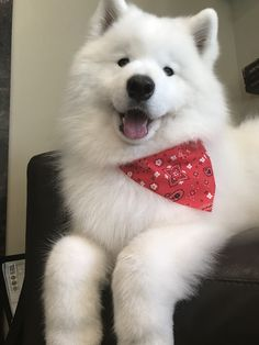 #dog #samojede #samoyed #sammy #sweet #lifegoal