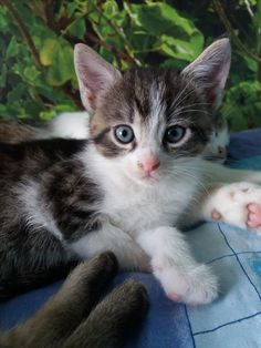 My sweet little Boy :3 Marcellus *.*
