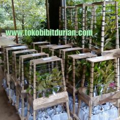 Budidayanya Durian Tree, Food And Drink, Fruit, Plants, Plant, Planets