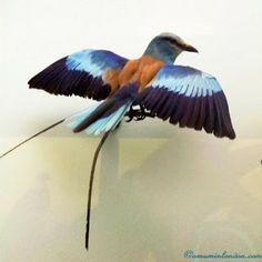 London's Museums: the National History Museum Blue Bird www.amuminlondon.com