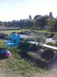 At the Lavender Farm