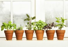 Always have fresh basil, parsley, sage, and more on hand when you follow these top tips for growing successful kitchen herb gardens.
