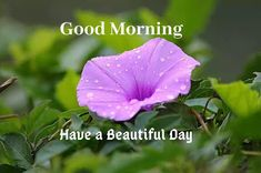 A collection of Beautiful Good Morning Images, beautiful good morning pictures, whatsapp good morning images and quotes. Sweet Good Morning Images, Morning Images In Hindi, Good Morning Picture, Morning Pictures, Good Morning Quotes, Types Of Purple Flowers, Pink Flowers, Flower Types, Rose Color Meanings